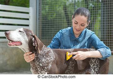 animal, veterinario, hembra, perro, refugio, acariciando