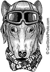 Animal wearing aviator helmet with glasses. Vector picture....