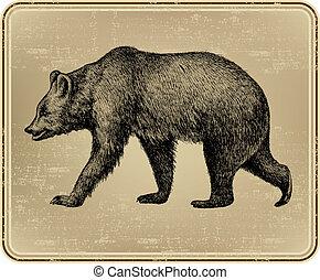 Animal wild bear, hand-drawing. Vector illustration.