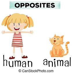 animal, wordcard, contrario, humano
