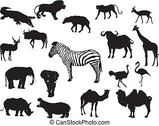 animale, collezione, africano