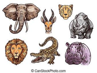 animale, leone, elefante, set, africano, schizzo, ippopotamo