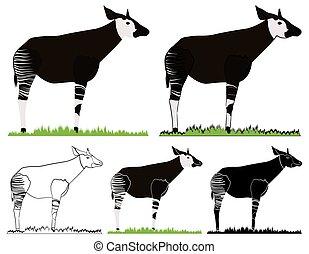 animale, okapi, africano, vista., fronte