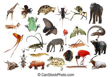 animale selvaggio, collezione, isolato
