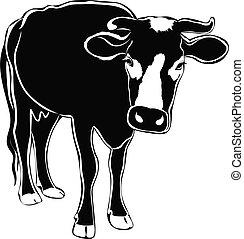 animales, él, vaca, aislado