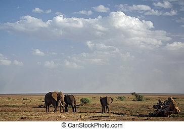 animales, 021, elefante