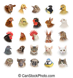 animales, aves