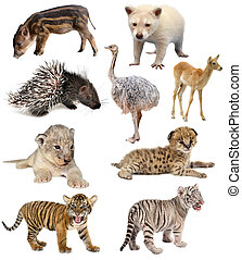 animales bebé, colección