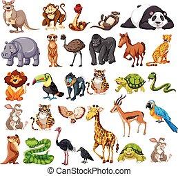 animales, blanco, tipos, diferente, salvaje