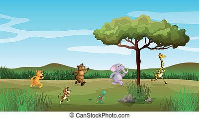 animales, carreras, en, el, colina