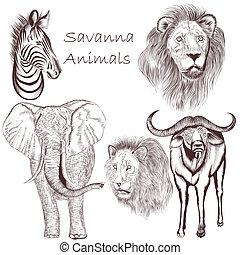 animales, colección, mano, vector, diseño, dibujado, sabana