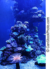 animales, colorido, marina, hermoso