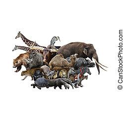 animales, concepto