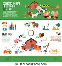animales domésticos, infographics