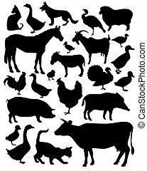 animales, en la granja