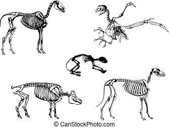 animales, esqueleto