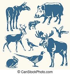 animales, fondo blanco, salvaje