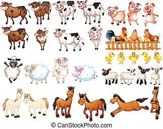 animales, granja, clases, muchos