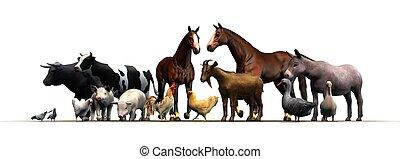 animales, granja