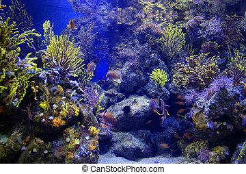 animales, hermoso, acuario, marina