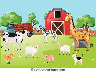 animales, muchos, corral