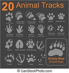 animales, pistas, vector, -, conjunto