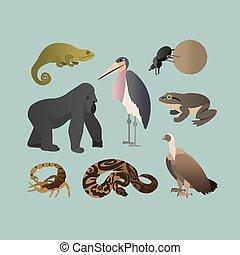animales, pitón, sabana, diferente, pelota, africano, grif., camaleón, conjunto, rana, vector, escarabajo, plano, goliath, torcer, escorpión, marabou, animals., style., gorila