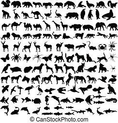 animales, siluetas, colección
