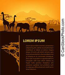 animales, siluetas, ocaso, plantilla, africano, diseño