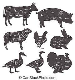 animales, vendimia, doméstico, diagrama, corte, comida