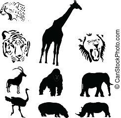 animali, collezione, africano