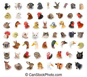 animali, e, uccelli