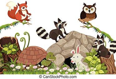 animali, foresta, felice