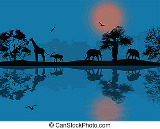 animali selvaggi, africano