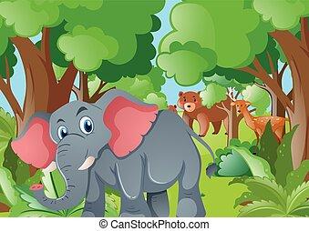 animali selvaggi, foresta