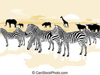 animali selvaggi, in, il, savana