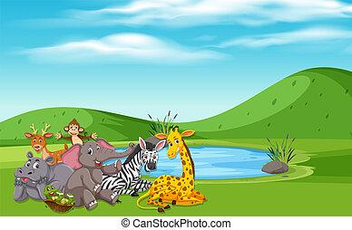 animali selvaggi, natura