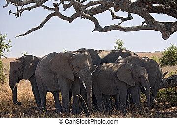 animals 051 elephant under tree