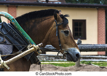 A red horse in harness with the clamp, a shaft and an arc.