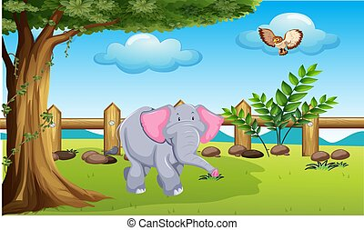 animals are playing in the park
