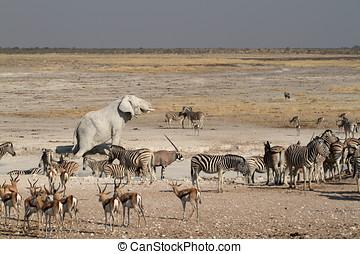 Animals at a waterhole in Etosha