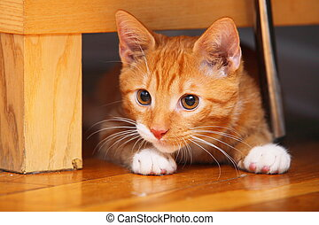 Animals at home. Red cute little baby cat pet kitten laying on floor