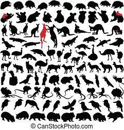 Animals Australia - Hundred silhouettes of wild rare animals...
