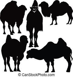 animals camel vector
