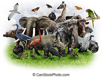 Animals Collage - A Collage Of Wild Animals And Birds
