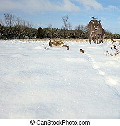 Animals gathering in winter.