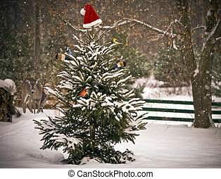 Animals gathering in winter. - A Spruce tree in the snow...