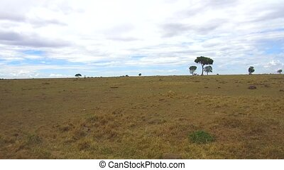 animals grazing in savanna at africa