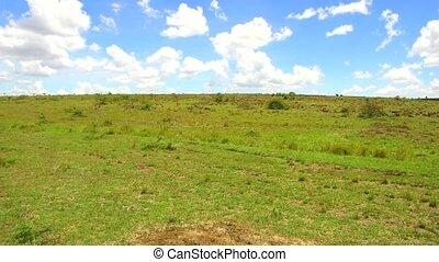 animals grazing in savanna at africa - nature, landscape,...