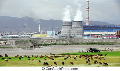 Animals grazing next to power plant - Sheeps grazing next to...